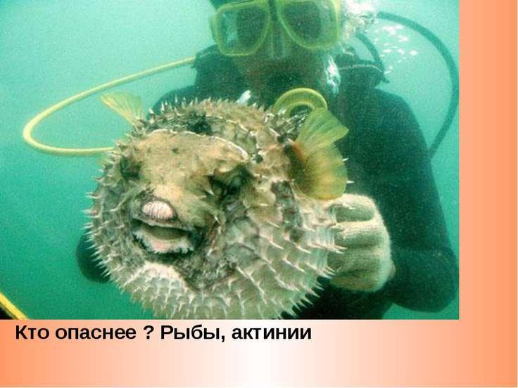 Кто опаснее ? Рыбы, актинии