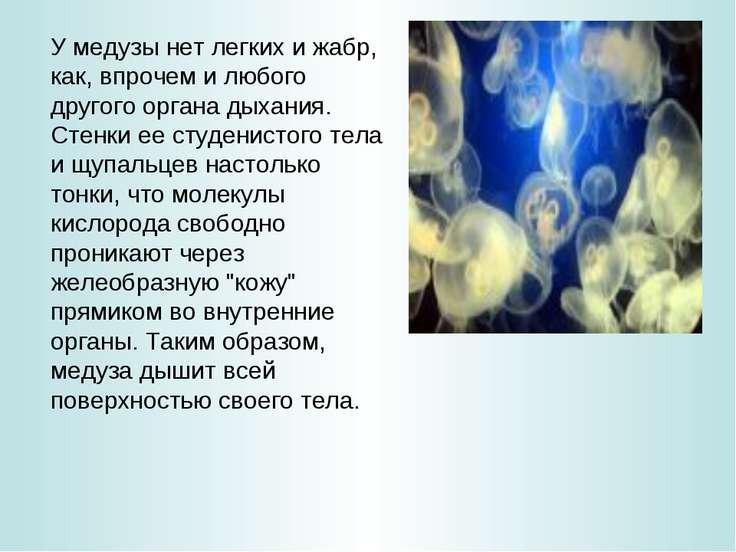 У медузы нет легких и жабр, как, впрочем и любого другого органа дыхания. Сте...
