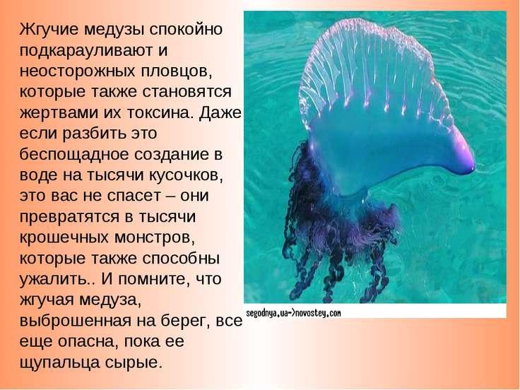 Жгучие медузы спокойно подкарауливают и неосторожных пловцов, которые также с...