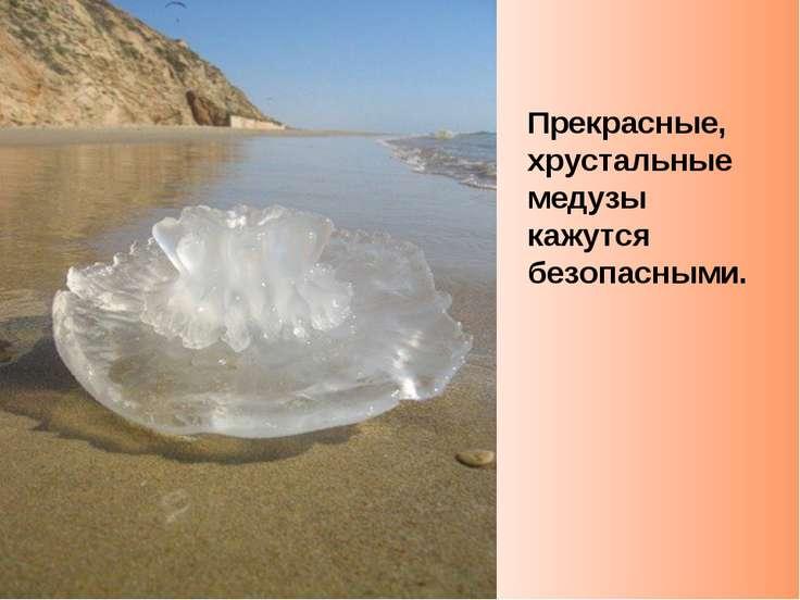 Прекрасные, хрустальные медузы кажутся безопасными.