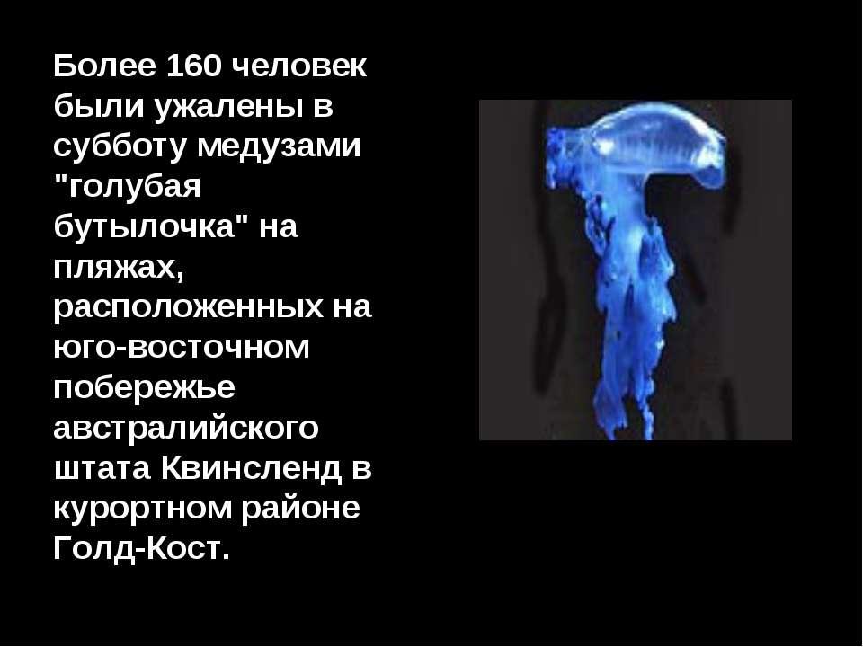 """Более 160 человек были ужалены в субботу медузами """"голубая бутылочка"""" на пляж..."""