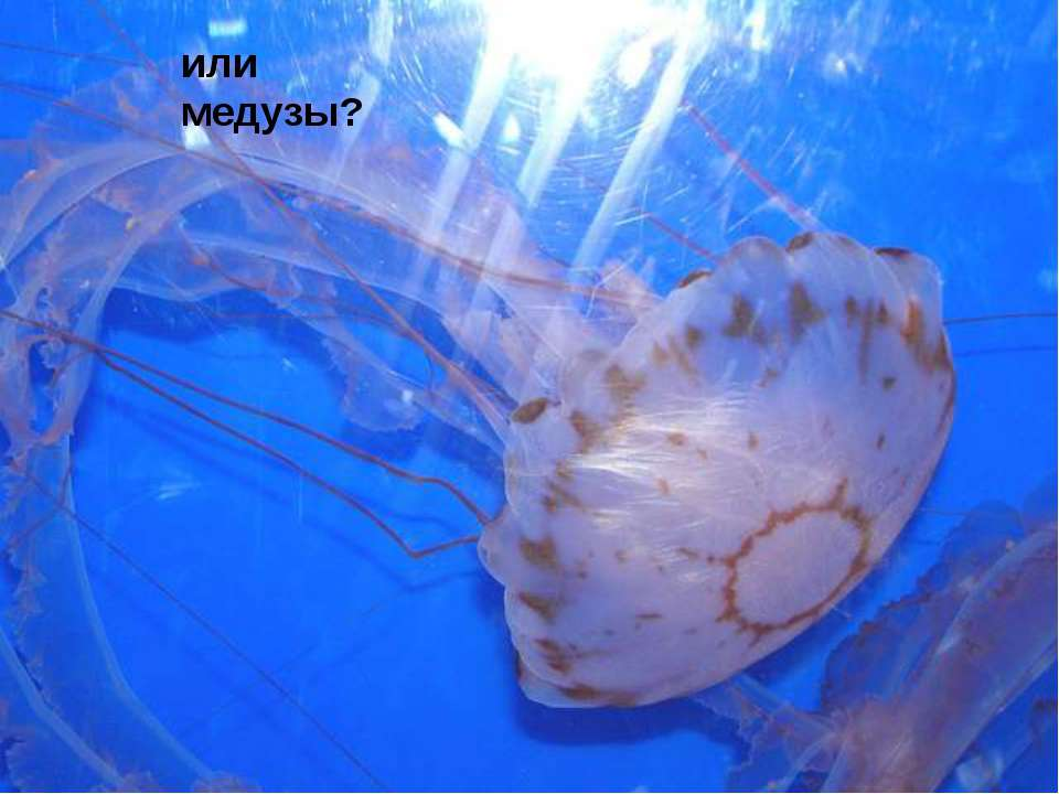 или медузы?