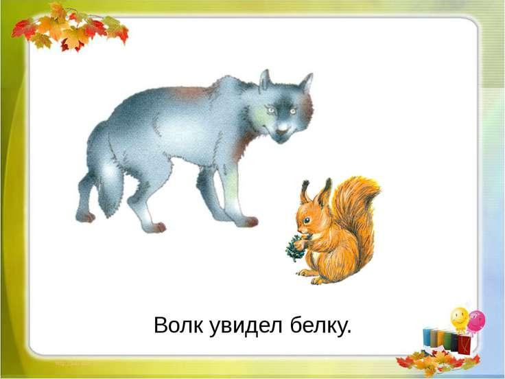 Волк увидел белку.