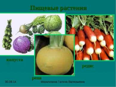 Пищевые растения редис капуста репа Мерзликина Галина Валерьевна