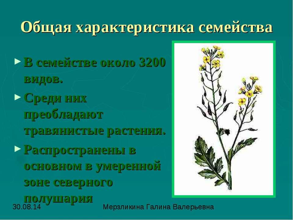 Общая характеристика семейства В семействе около 3200 видов. Среди них преобл...