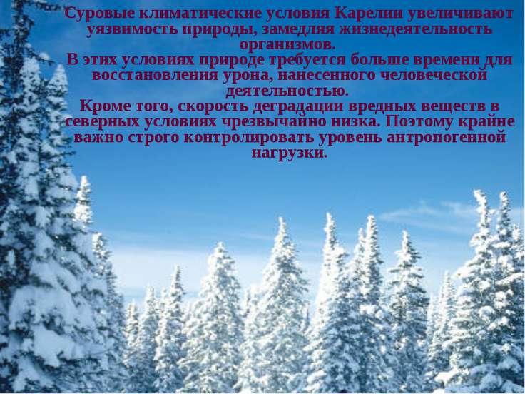 Суровые климатические условия Карелии увеличивают уязвимость природы, замедля...