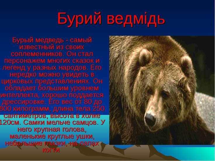 Бурий ведмідь Бурый медведь - самый известный из своих соплеменников. Он стал...