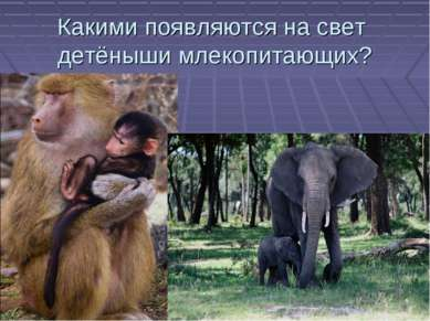 Какими появляются на свет детёныши млекопитающих?