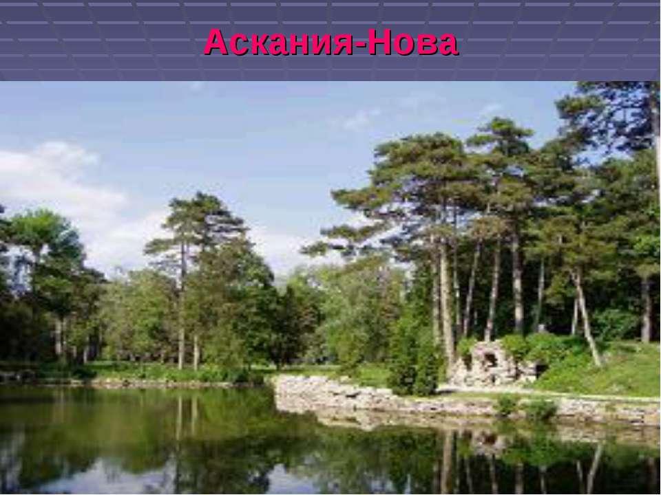 Аскания-Нова