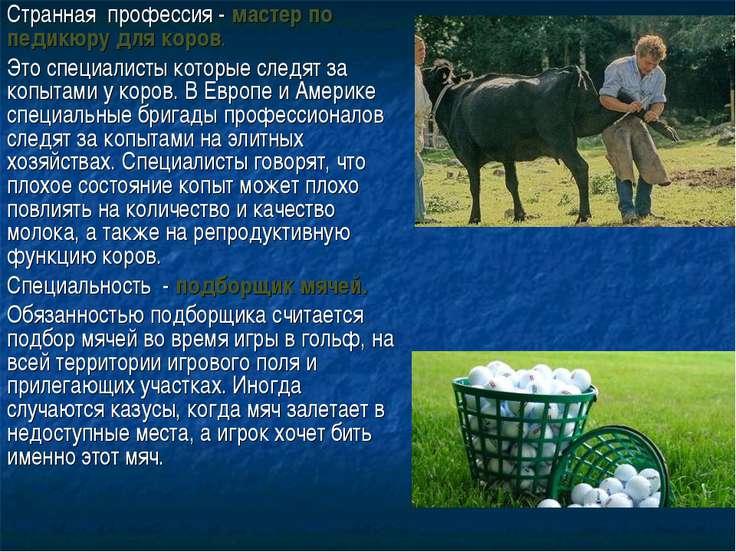 Странная профессия - мастер по педикюру для коров. Это специалисты которые сл...