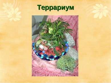 Террариум