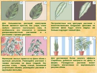 Для большинства растений наилучшим фоном является простая, без узора, стена л...