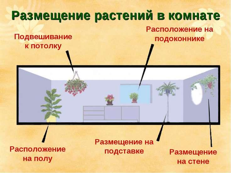 Размещение растений в комнате Подвешивание к потолку Расположение на подоконн...