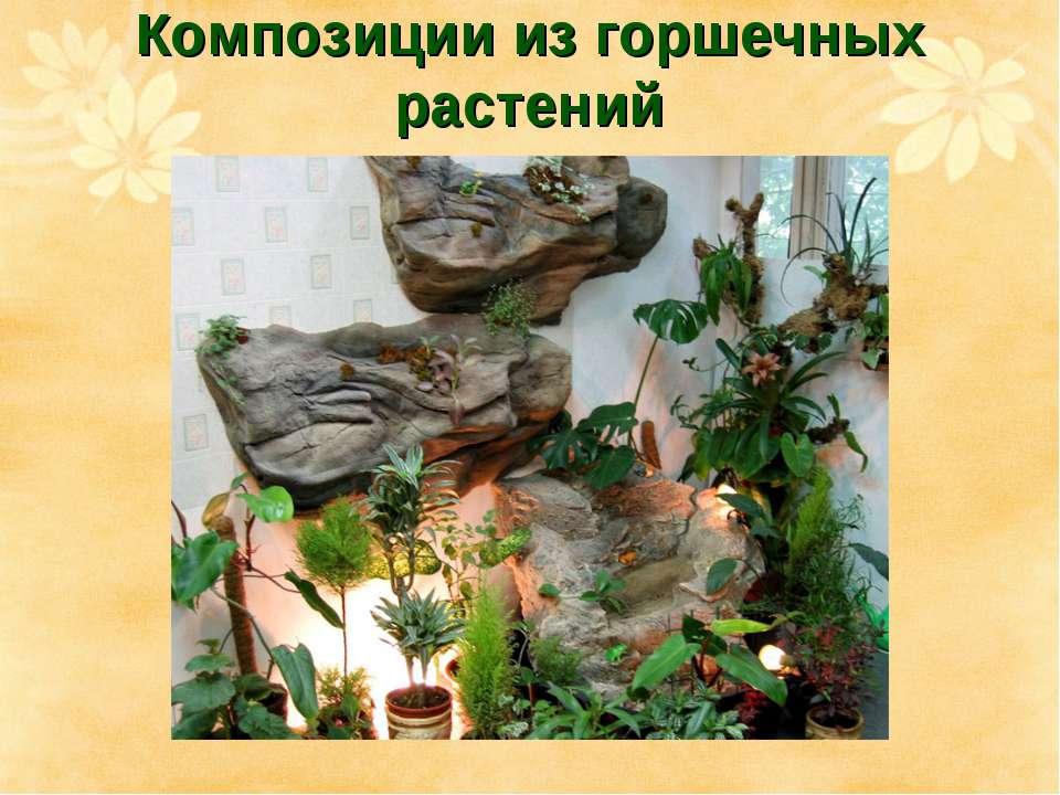 Композиции из горшечных растений