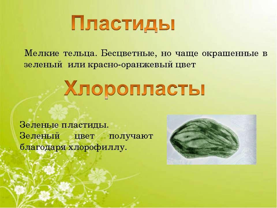 Мелкие тельца. Бесцветные, но чаще окрашенные в зеленый или красно-оранжевый ...