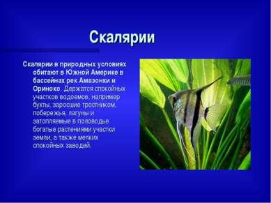 Скалярии Скалярии в природных условиях обитают в Южной Америке в бассейнах ре...