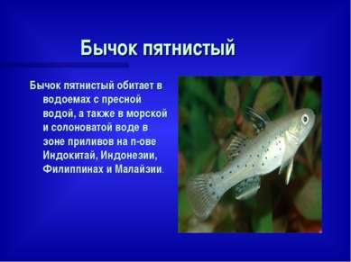 Бычок пятнистый Бычок пятнистый обитает в водоемах с пресной водой, а также в...