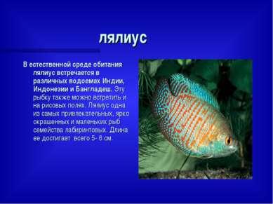 лялиус В естественной среде обитания лялиус встречается в различных водоемах ...
