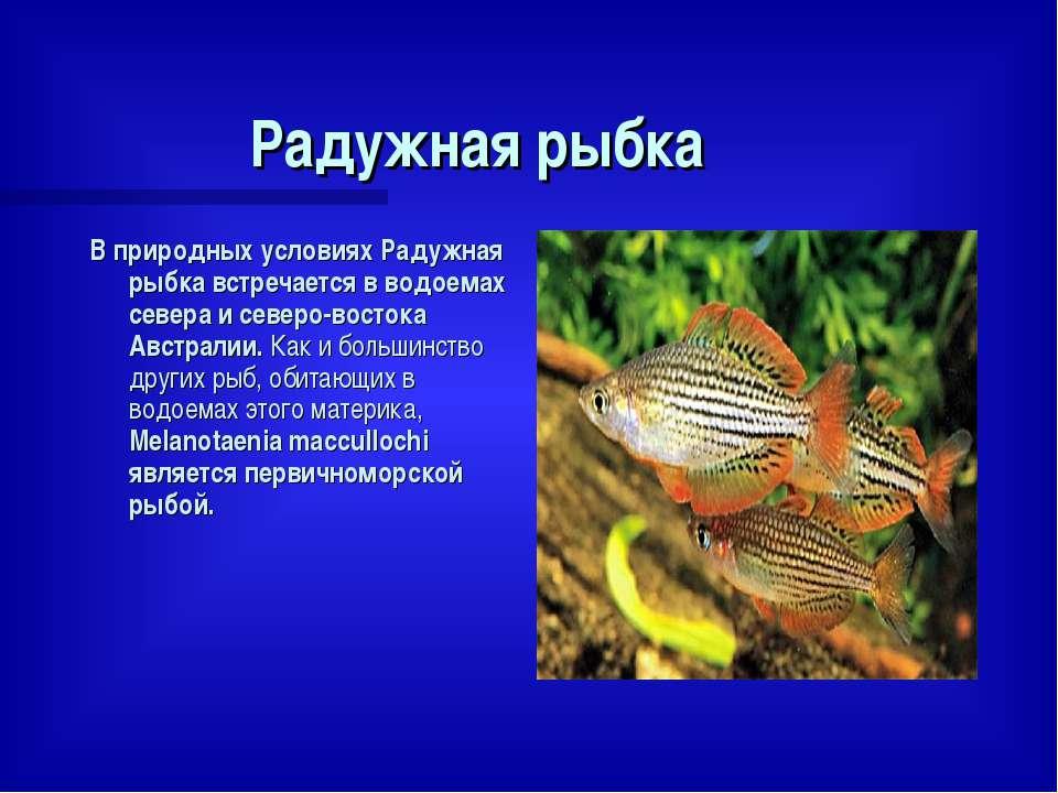 Радужная рыбка В природных условиях Радужная рыбка встречается в водоемах сев...