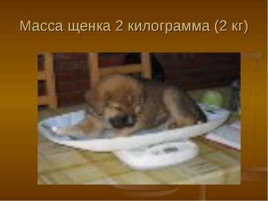 Масса щенка 2 килограмма (2 кг)