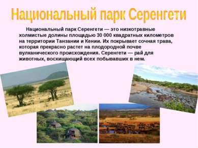 Национальный парк Серенгети — это низкотравные холмистые долины площадью 300...