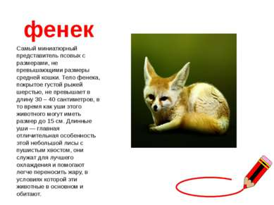 фенек Самый миниатюрный представитель псовых с размерами, не превышающими раз...