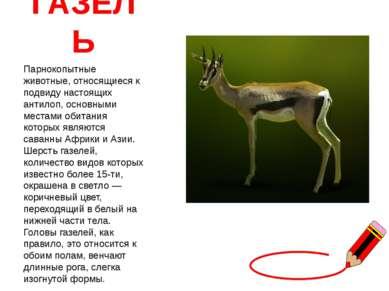 ГАЗЕЛЬ Парнокопытные животные, относящиеся к подвиду настоящих антилоп, основ...