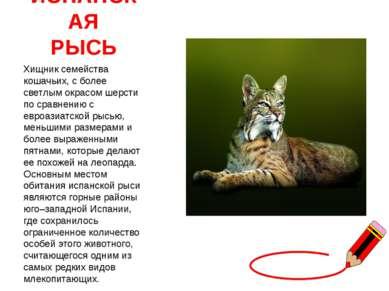 ИСПАНСКАЯ РЫСЬ Хищник семейства кошачьих, с более светлым окрасом шерсти по с...