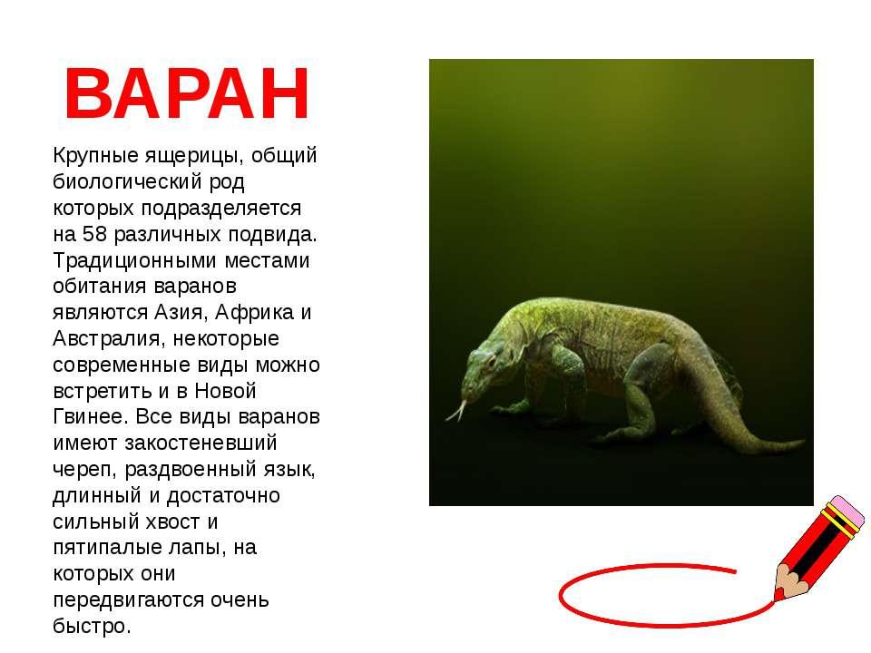 ВАРАН Крупные ящерицы, общий биологический род которых подразделяется на 58 р...