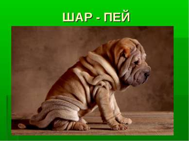 ШАР - ПЕЙ