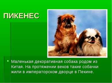 ПИКЕНЕС Маленькая декоративная собака родом из Китая. На протяжении веков так...