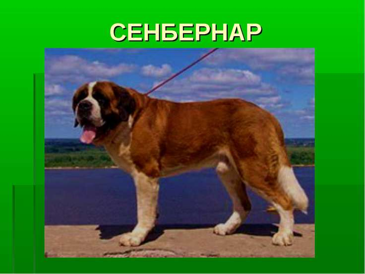 СЕНБЕРНАР