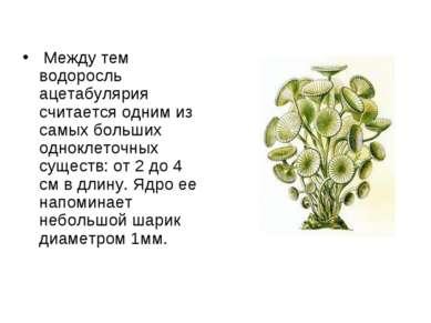 Между тем водоросль ацетабулярия считается одним из самых больших одноклеточн...