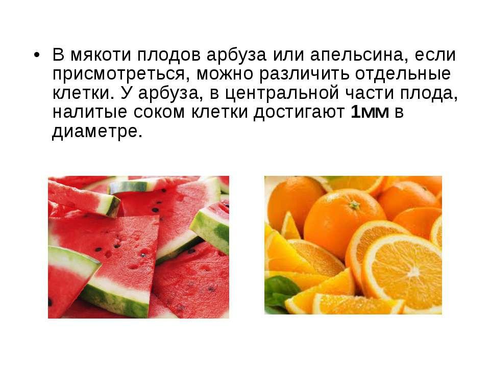 В мякоти плодов арбуза или апельсина, если присмотреться, можно различить отд...