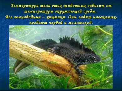 Температура тела этих животных зависит от температуры окружающей среды. Все з...