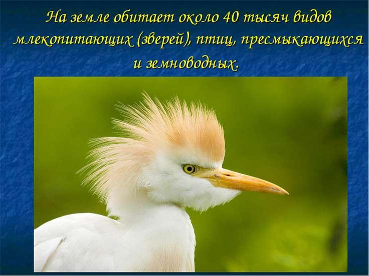 На земле обитает около 40 тысяч видов млекопитающих (зверей), птиц, пресмыкаю...