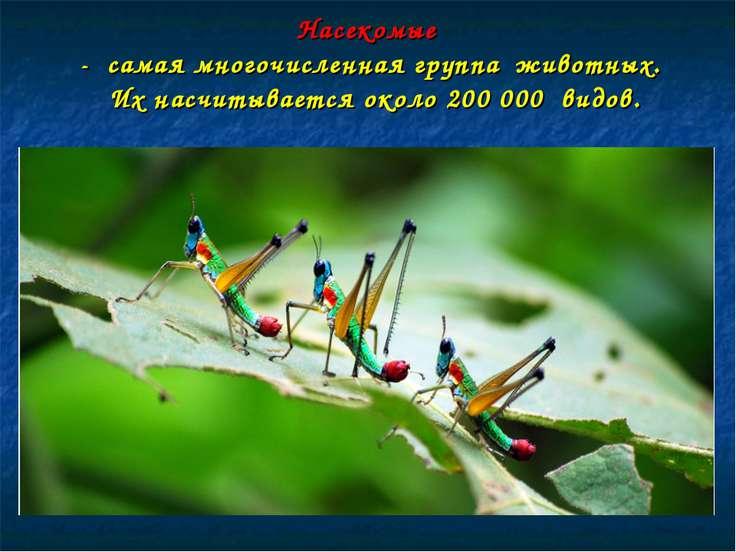 Насекомые - самая многочисленная группа животных. Их насчитывается около 200 ...