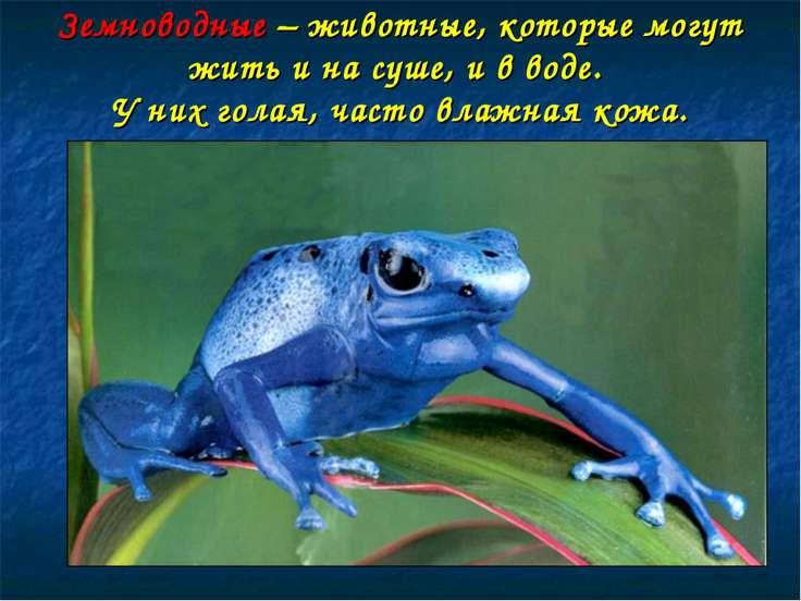 Земноводные – животные, которые могут жить и на суше, и в воде. У них голая, ...