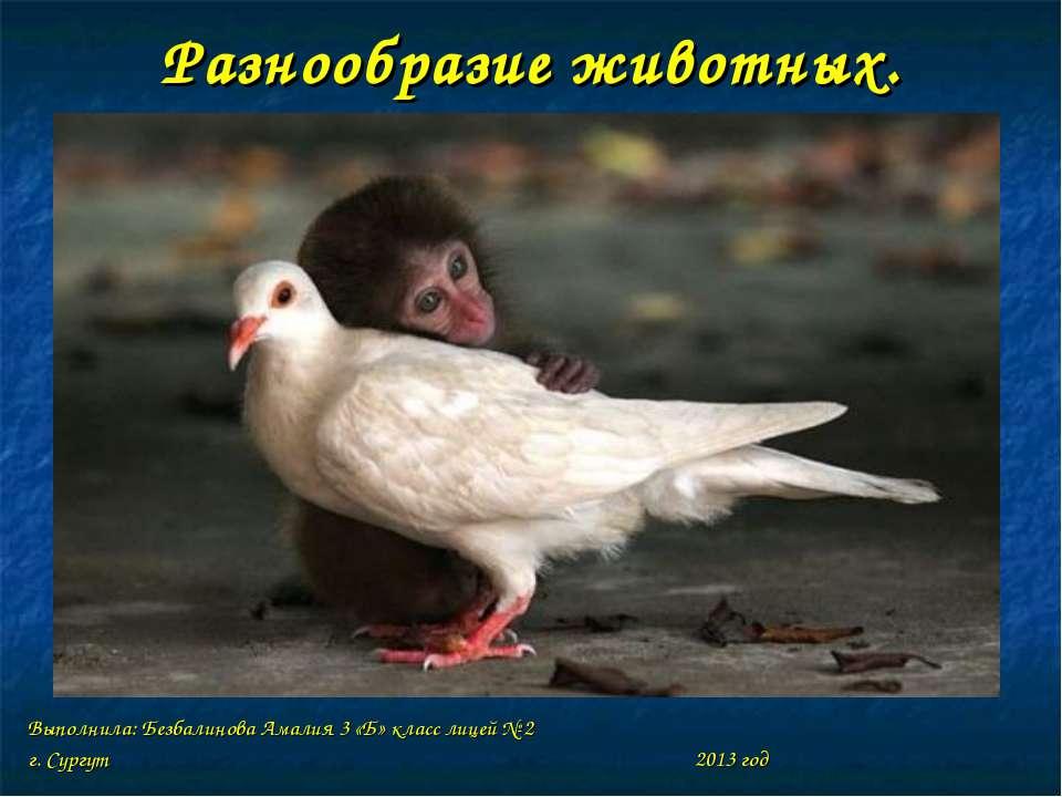 Разнообразие животных. Выполнила: Безбалинова Амалия 3 «Б» класс лицей № 2 г....