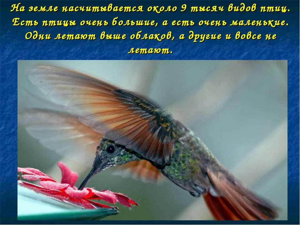 На земле насчитывается около 9 тысяч видов птиц. Есть птицы очень большие, а ...