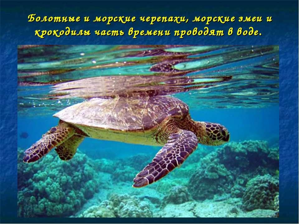 Болотные и морские черепахи, морские змеи и крокодилы часть времени проводят ...