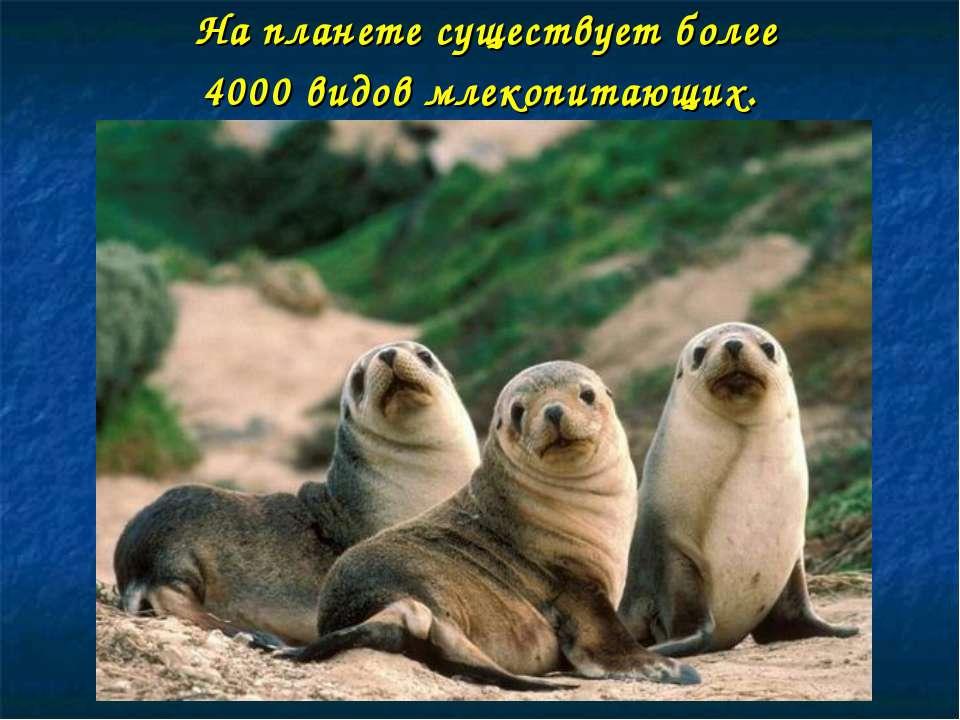 На планете существует более 4000 видов млекопитающих.
