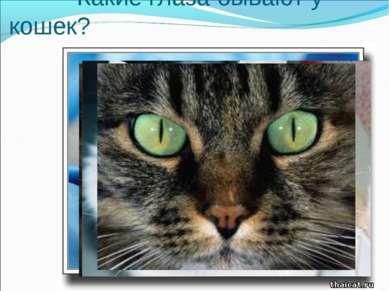 Какие глаза бывают у кошек?