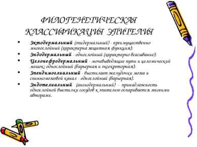 ФИЛОГЕНЕТИЧЕСКАЯ КЛАССИФИКАЦИЯ ЭПИТЕЛИЯ Эктодермальный (эпидермальный) - преи...