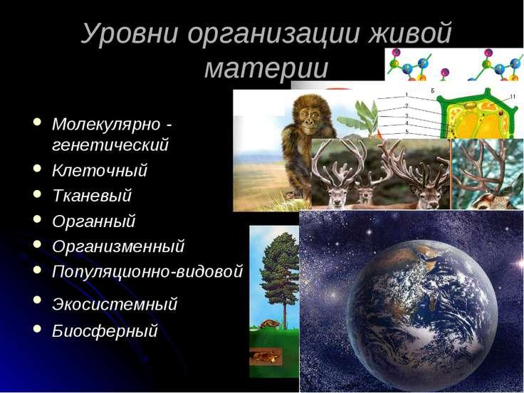 Уровни организации живой материи Молекулярно - генетический Клеточный Тканевы...