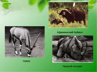 Орикс Африканский буйвол Черный носорог