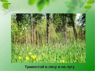 Травостой в лесу и на лугу