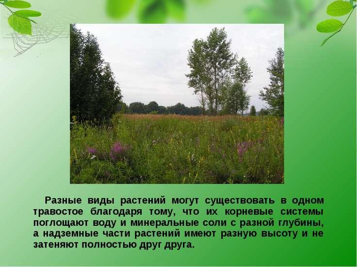 Разные виды растений могут существовать в одном травостое благодаря тому, что...