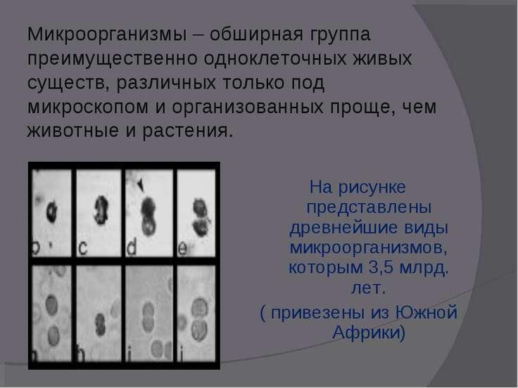 Микроорганизмы – обширная группа преимущественно одноклеточных живых существ,...