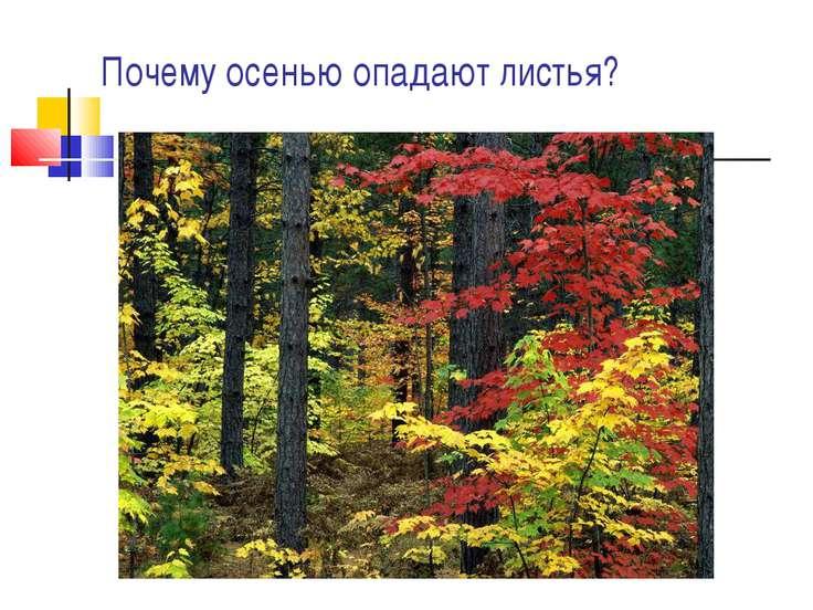 Почему осенью опадают листья?